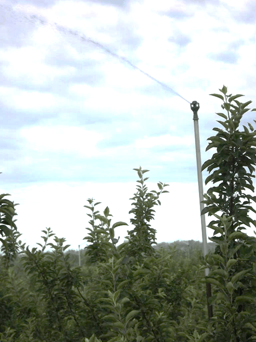 an overhead irrigation sprinkler that can be used for frost protection