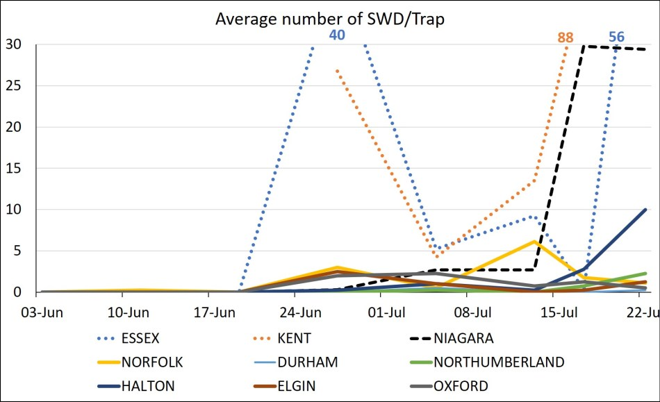 Graph of SWD trap catch in Essex, Kent, Niagara, Norfolk, Durham, Northumberland, Halton, Elgin and Oxford counties in Ontario.  Populations are starting to increase in most counties as of July 21.