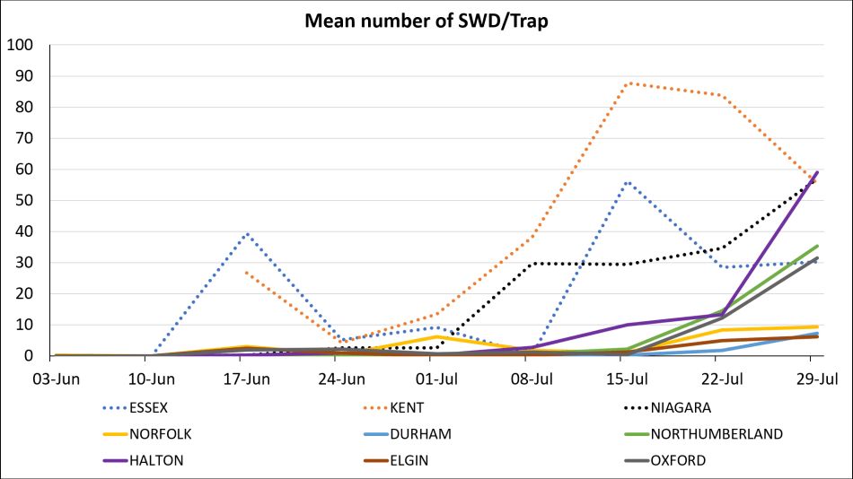 Graph of mean number of SWD/trap in monitored counties