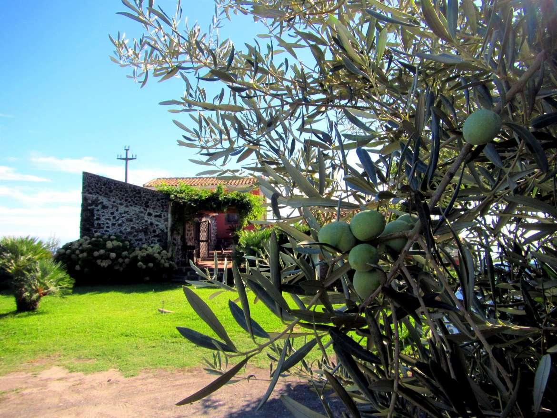 Olives de Sicile et chambre d'hôte agritourisme