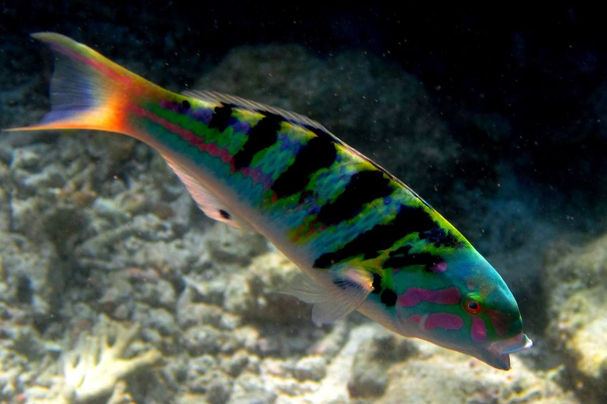 Snorkeling aux Maldives : le guide du Snorkeleur avisé