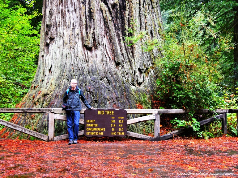 Road trip en Californie du Nord Big Tree Redwood National Park Californie USA blog voyage suisse cosy On holidays again