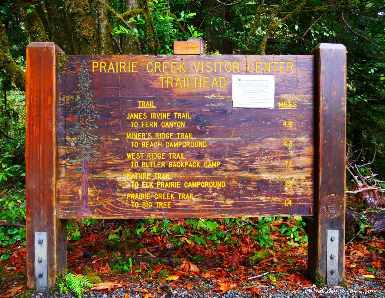 Randonnée Prairie Creek à Redwood National Park en Californie