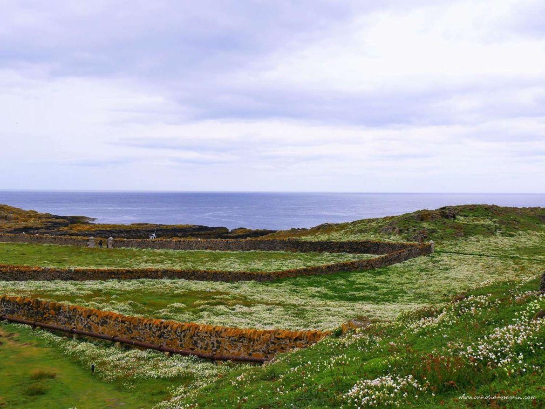 Chemins sur l'Ile de May en Ecosse