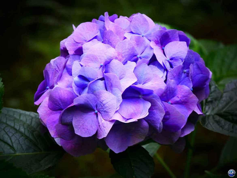 Fleur dans le Jardin de la Cude aux alentours de Luxeuil-les-Bains dans les Vosges du Sud