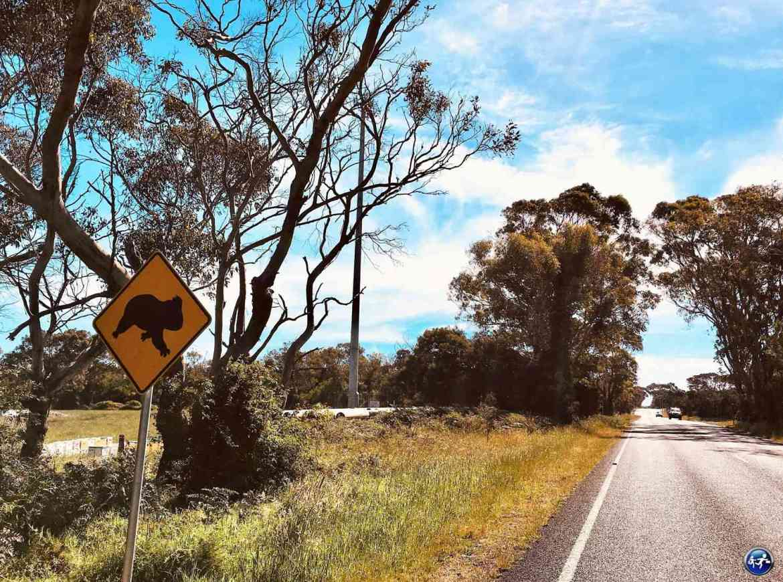 conduire en australie panneau koala phillip island victoria australie blog voyage suisse cosy on holidays again