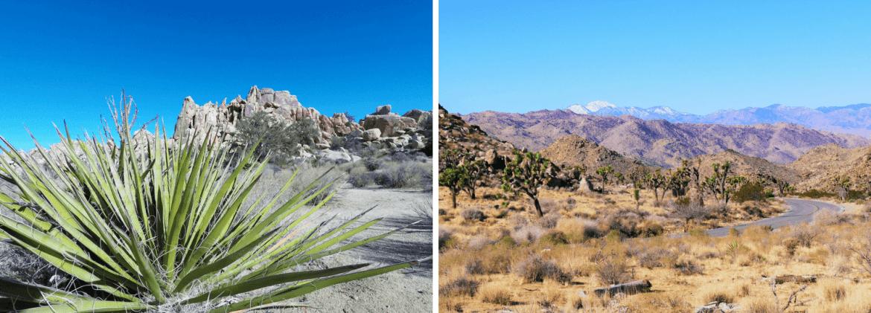 Paysages du parc de Joshua Tree en Californie du Sud