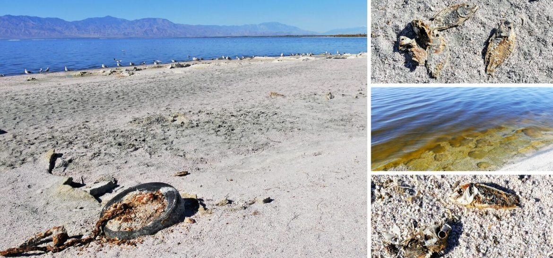 Les rives polluées du Salton Sea