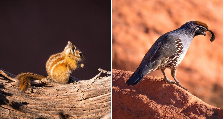 Ecureuil et oiseau de l'Utah et du Nevada