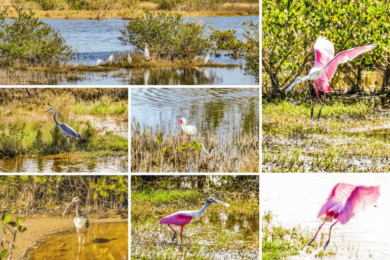 Observer les oiseaux à Merritt Island en Floride