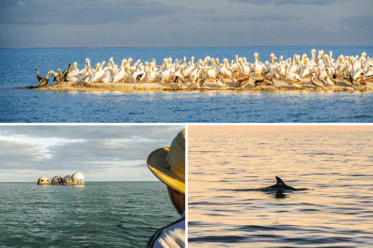 Visiter les Ten Thousand Islands en Floride