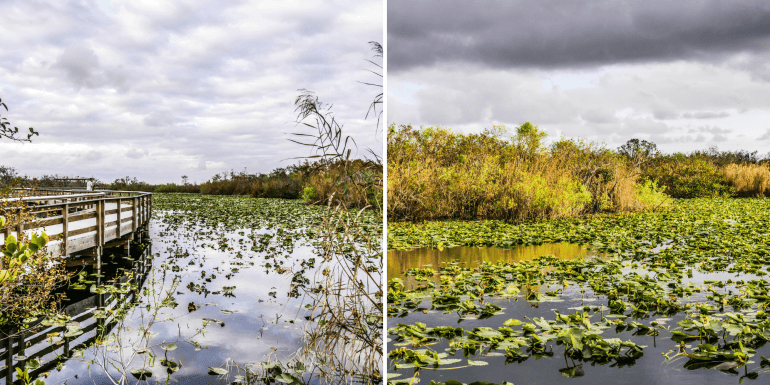 Anhinga Trail à Royal Palm dans les Everglades