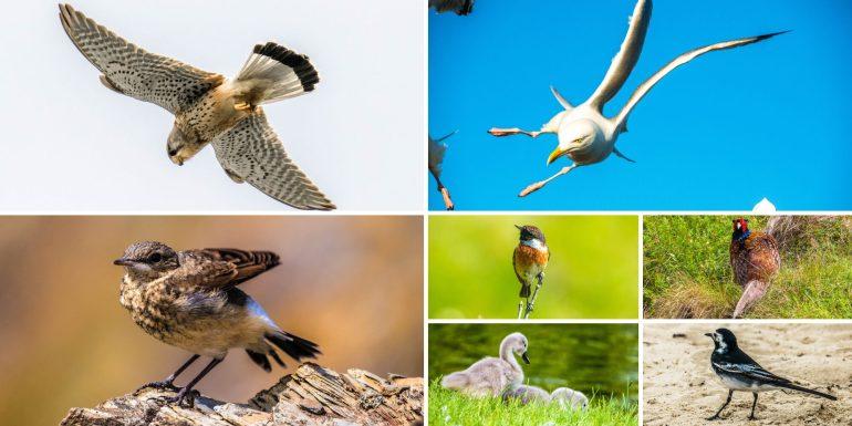 Oiseaux vus dans le sud Angleterre
