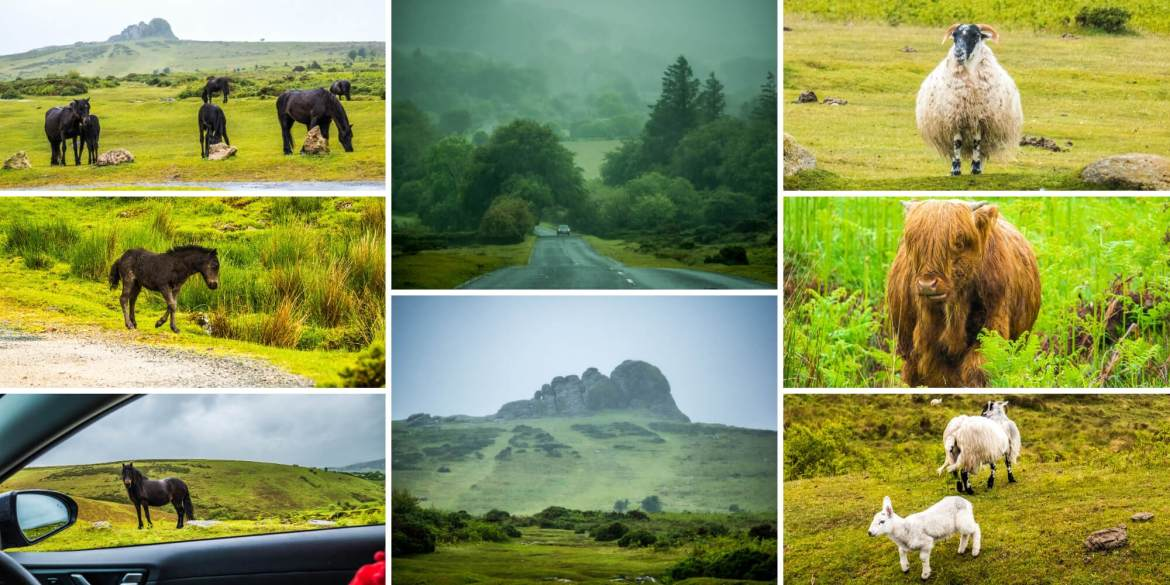 Visiter le Dartmoor National Park