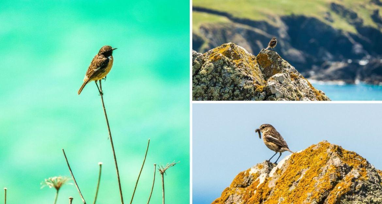 Observer les oiseaux en visitant les Cornouailles