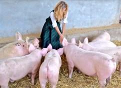 Pigs at a charcuterie farm in Austria.