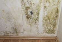 Habitat for mold