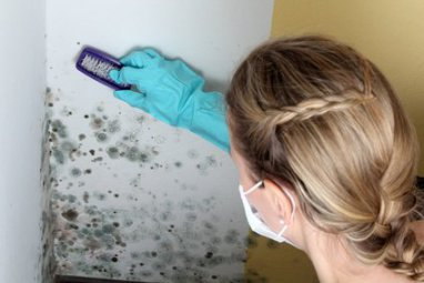 remove the mold in the apartment and house
