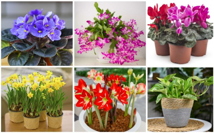 houseplants for gifts