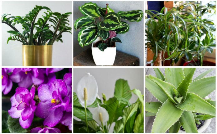 kitchen houseplants