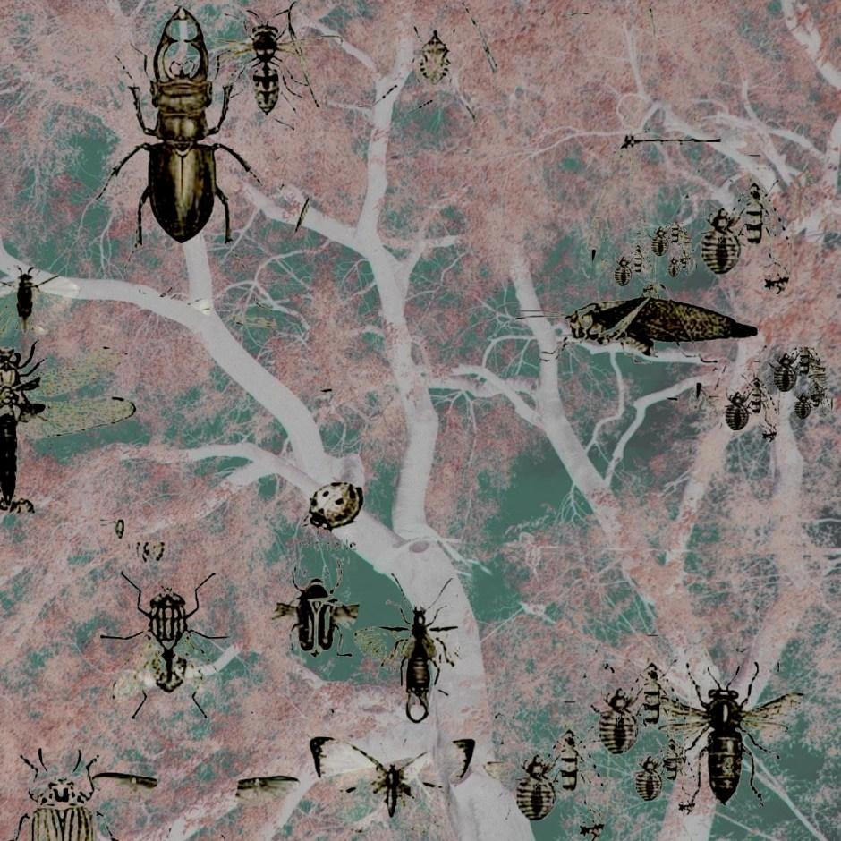 Almez virado saturado con insectos con inversión
