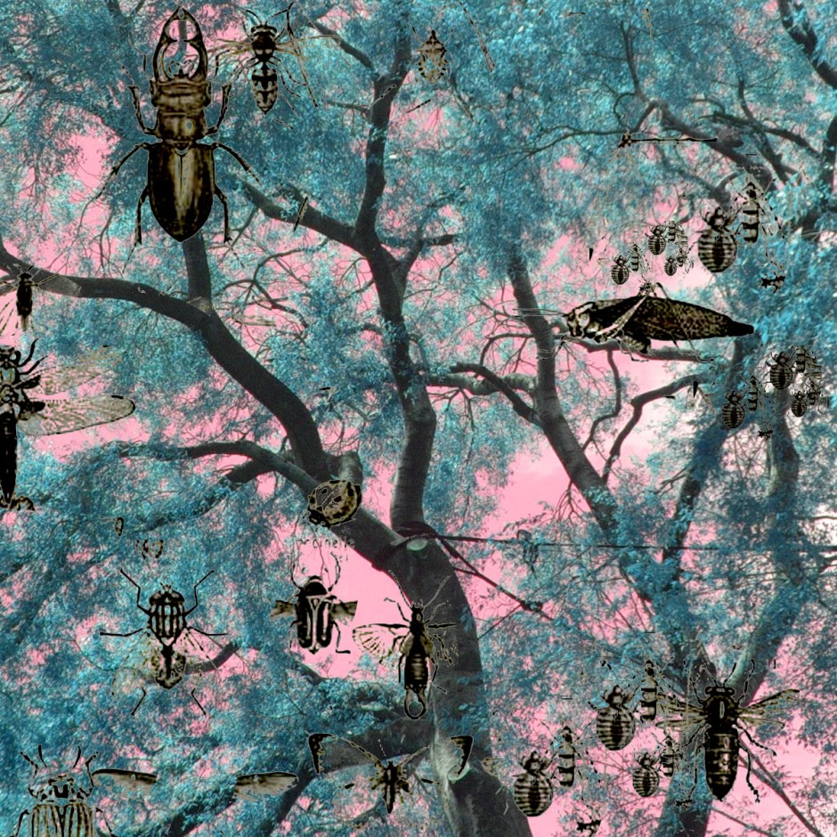 La misma foto en formato cuadrado y con los mismo insectos buscando el contraste,