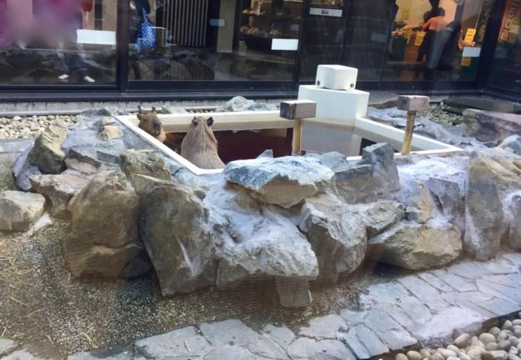 番屋の湯 カピバラ 温泉