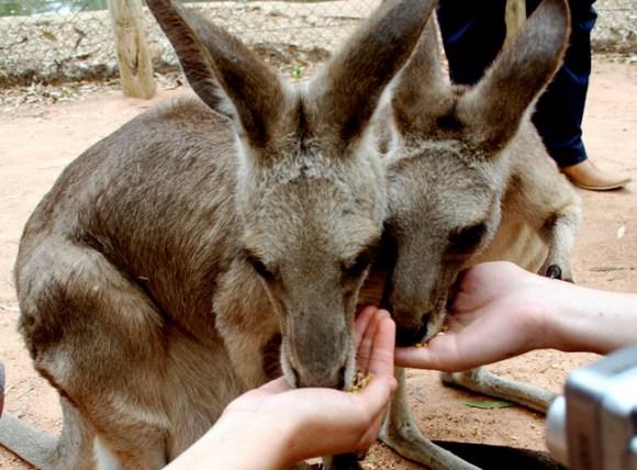休みに1度は訪れたい!動物とたわむれることができる観光地15箇所