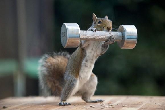 sPAY-Squirrels2