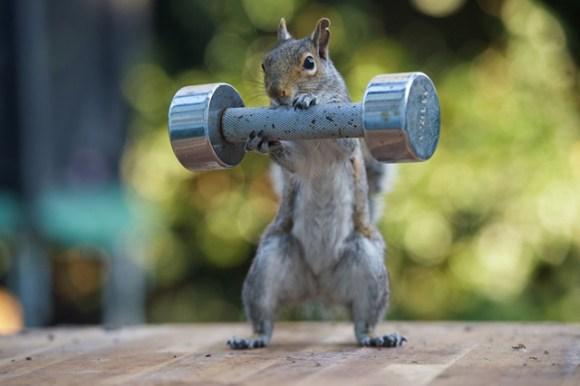 sPAY-Squirrels3