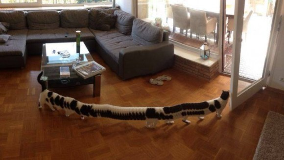 panoramic_cat