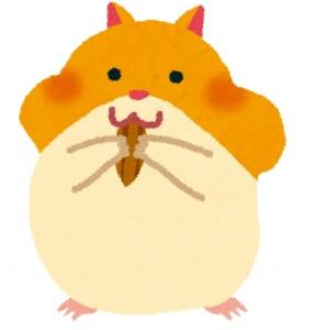 小動物の代表ハムスターの写真