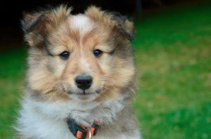 パブロフの犬、パブロフの実験