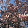 4月だよ桜だよ!新・爬虫類飼育者さんになる人へ