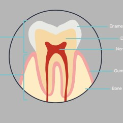 Tooth Layout Diagram Electric Baseboard Heating Wiring About Your Teeth The Online Dentist