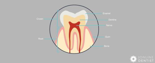 small resolution of the outermost layer is called enamel and the layer below is called dentine the innermost area is called the pulp or nerve of the tooth tooth diagram