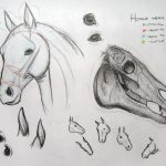 How To Draw Horses Tutorials Online Drawing Lessons