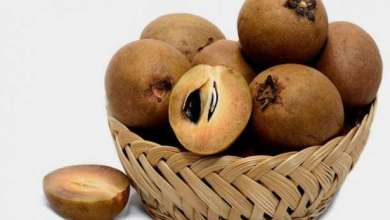 Photo of Sapodilla: Super Fruit