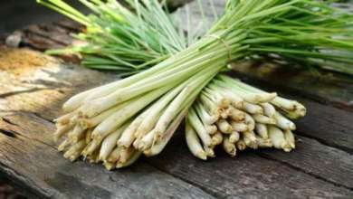 Lemon Grass and its oil benefits