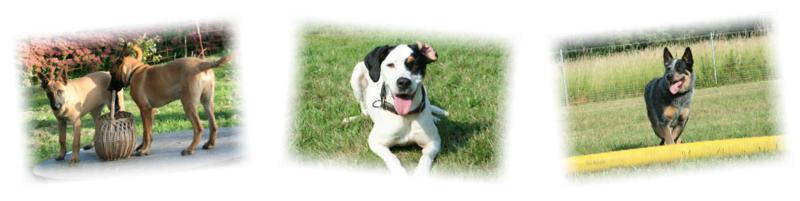 Video Grundlagen Hundeerziehung und Hundetraining - Online Tipps und Tricks für Hundeerziehung.