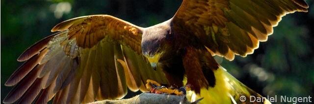 Falconry is Hummingbird SEO big brother