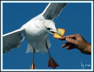 My Favorite Seagull