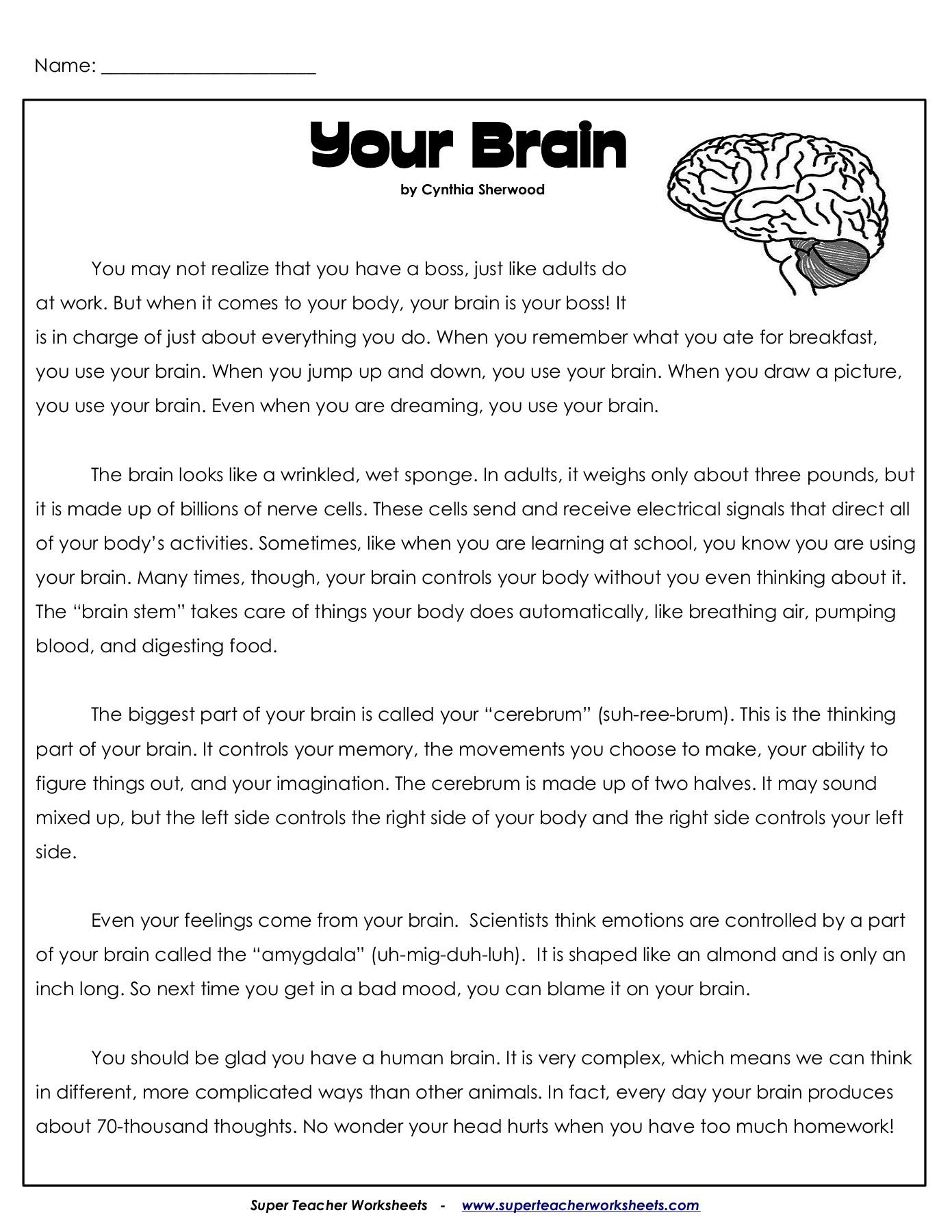 Parts Of The Brain Worksheet