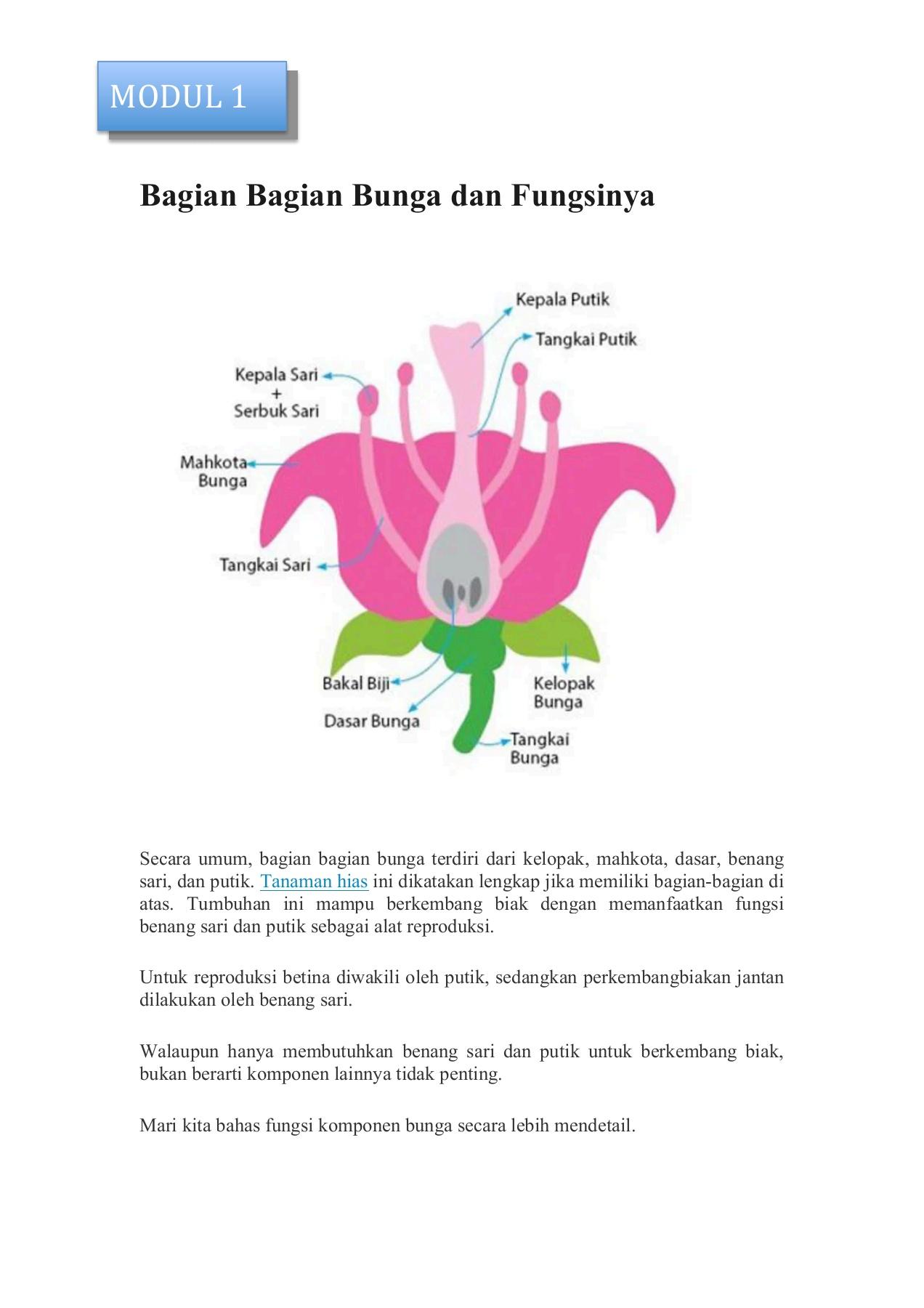 Gambar Bagian Bunga Dan Fungsinya : gambar, bagian, bunga, fungsinya, Bagian, Bunga, Fungsinya