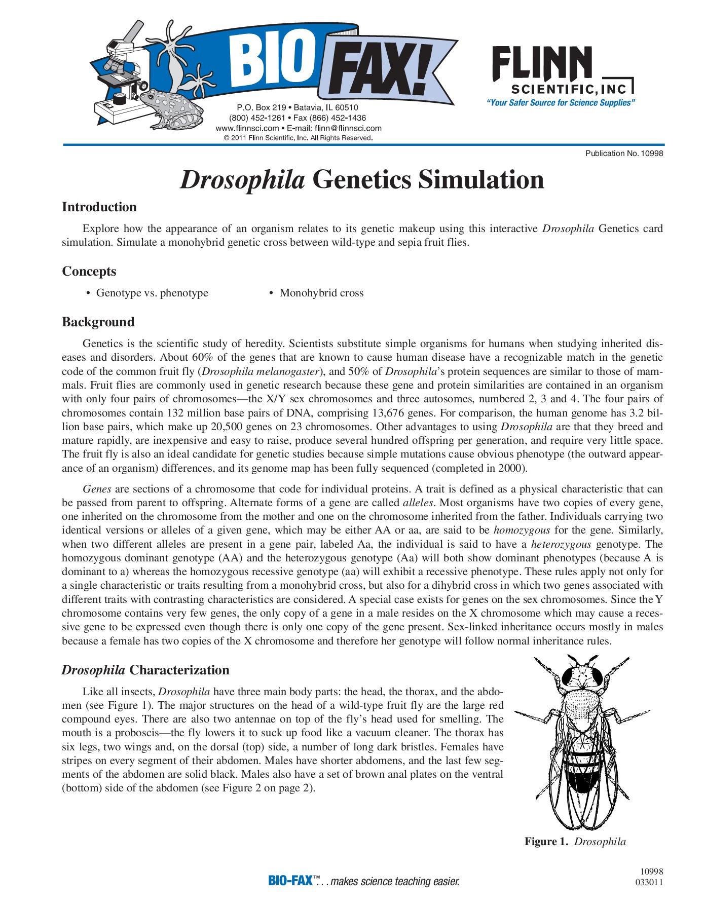Genotype Vs Phenotype Worksheet Answers