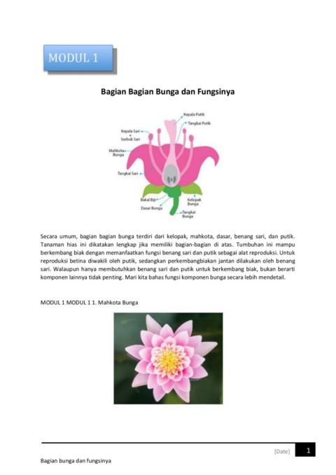 Gambar Bagian Bunga Dan Fungsinya : gambar, bagian, bunga, fungsinya, Bagian, Bunga, Fungsinya-Flip, EBook, Pages, AnyFlip