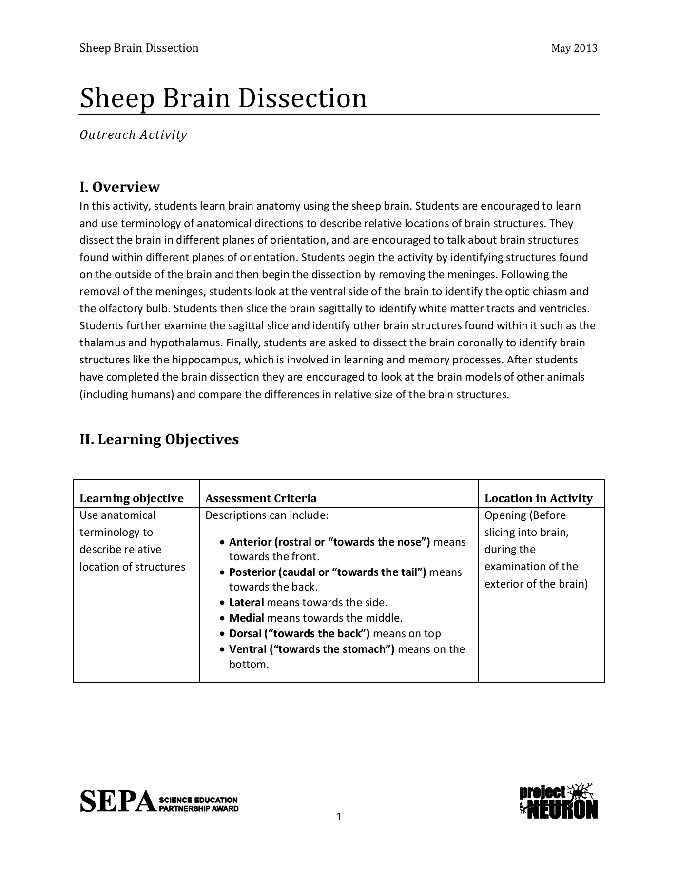 Sheep Brain Dissection Worksheet