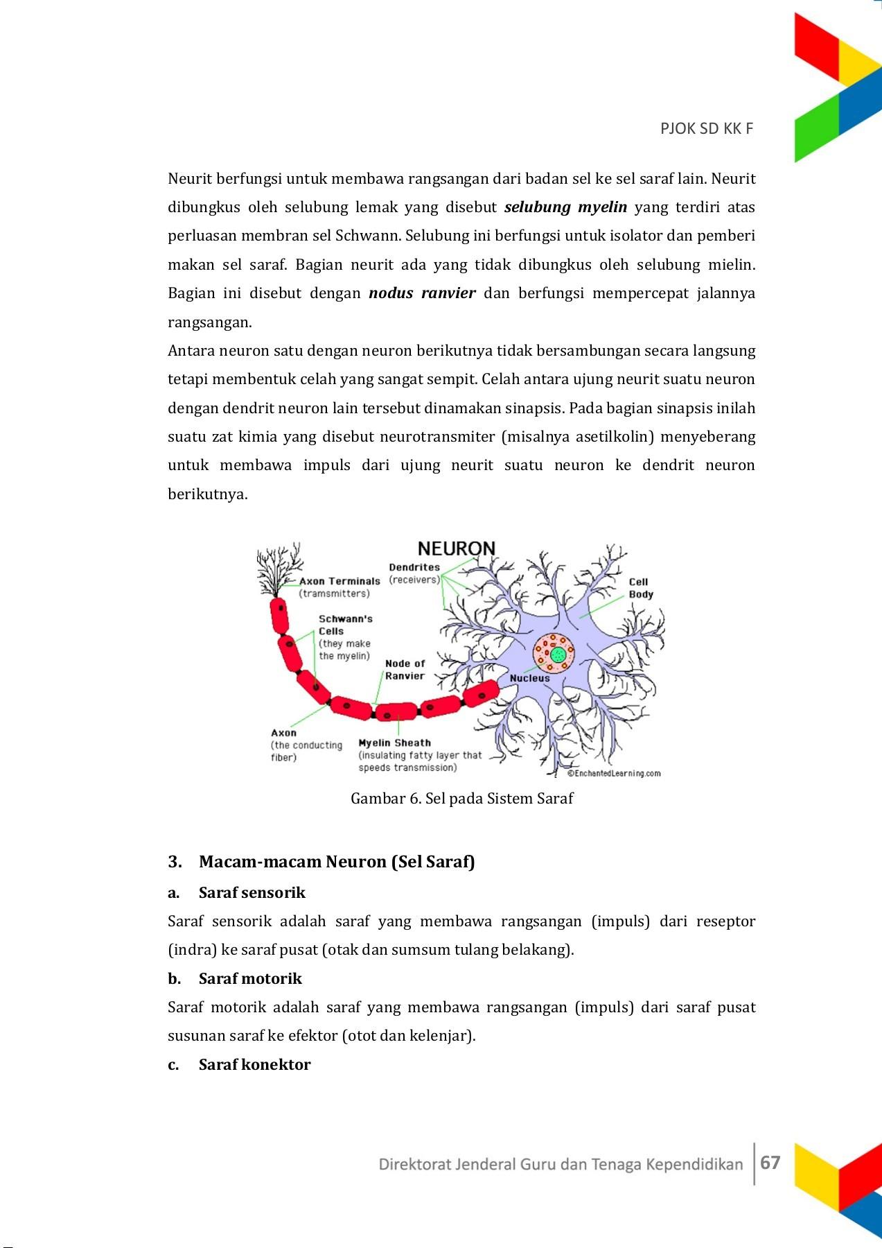 Sel Saraf Motorik Berfungsi Membawa Rangsang Dari : saraf, motorik, berfungsi, membawa, rangsang, Modul, Pages, Download, FlipHTML5