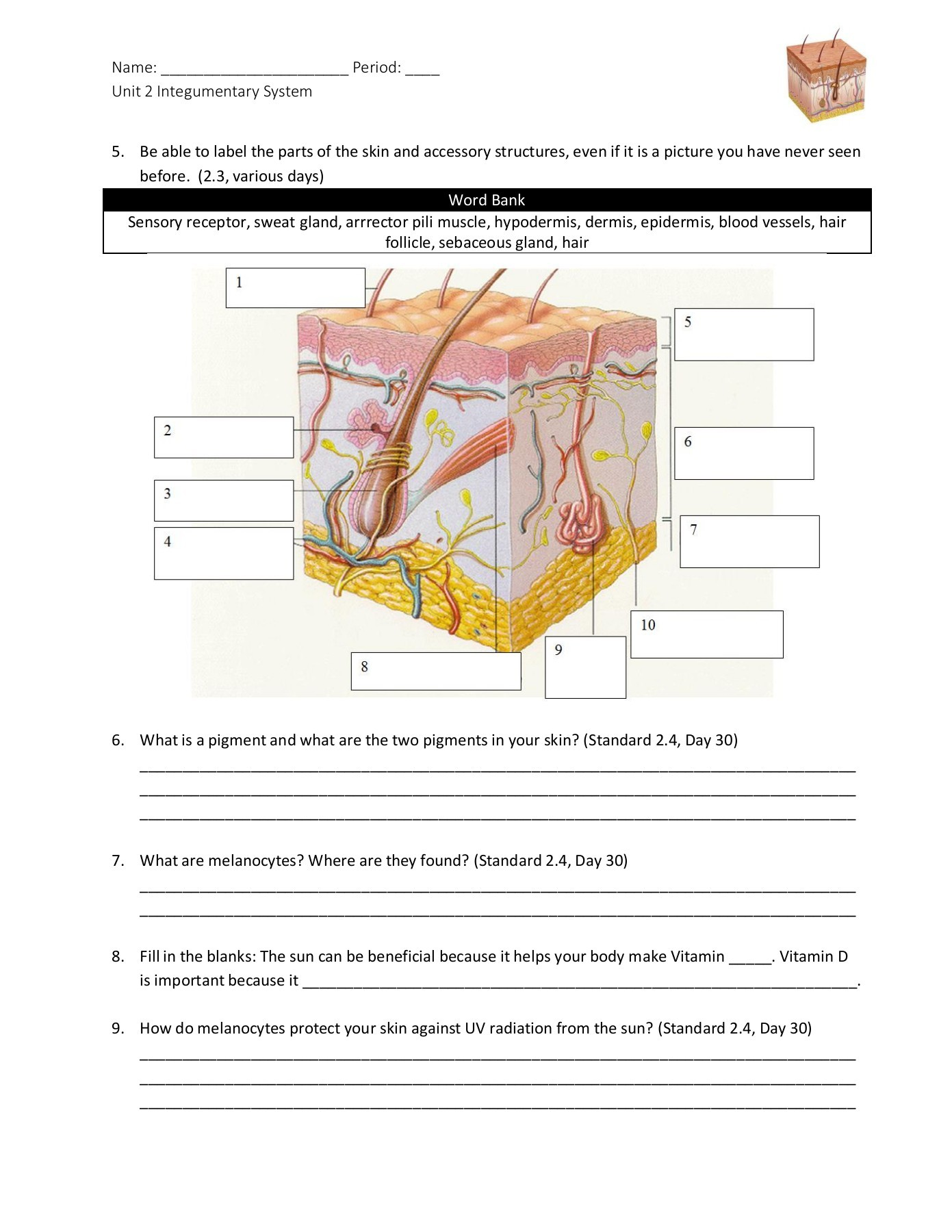 35 Skin Structure Diagram To Label