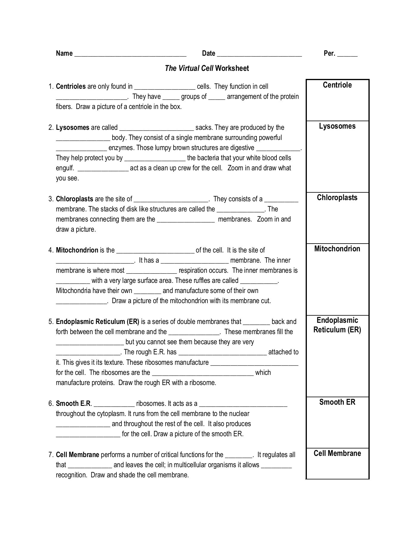 Chloroplasts And Mitochondria Worksheet